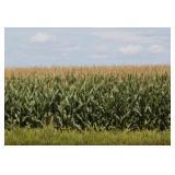 Brant Farm Ground Auction