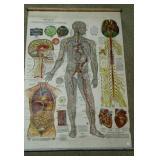 Medical chart - Arterial, Venous & Nervous Systems