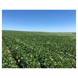 Walworth County, SD Farm Land - 196.3 Acres