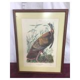 Artwork/print Audubon, Turkey