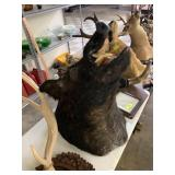 LARGE BOARS HEAD TAXIDERMY MOUNT