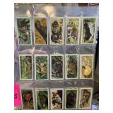 1962 AFRICAN WILDLIFE VTG TRADING CARDS