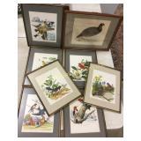 8 wild bird prints in 11x14 frames