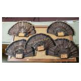 Board with 5 mounted turkey tails