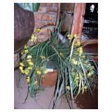 CLAY FLOWER POT W/ ARTIFICIAL PLANT
