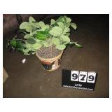 FLOWER POT W/ ARTIFICIAL PLANT