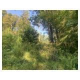 29 Acre Barbour County Land Auction