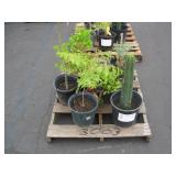 PALLET OF ASSORTED PLANTS