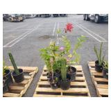 PALLET OF POTTED PLANTS