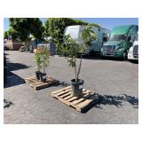PALLET OF PLANT