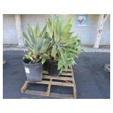 PALLET OF ASSORTED POTTED PLANTS
