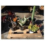 1 PALLET OF POTTED PLANTS