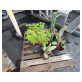 1 PALLET OF CACTI & POTTED PLANTS