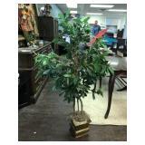 Ficus Tree with Brass Planter