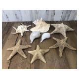Selection of Starfish