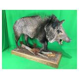 Jvlina Boar Mounted On Wood Plaque