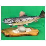 Brown Trout Mounted On Wood Plaque