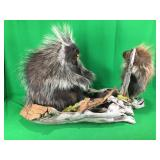 Porcupines Mounted On Wood