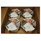 4 - Amaryllis Grow Kits