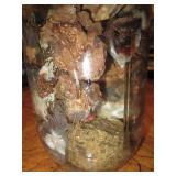 About 2lb Of Rough Mexican Fire Agate Quart Jar 12