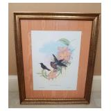 John Gould Litho From Original Plate Hand Colored