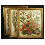 3 Antique 19th Century Framed Flower Art Pictures