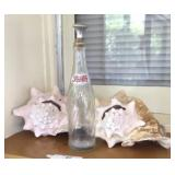Conch Shells And Pepsi Bottle