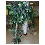 3 Artificial Ficus Trees with Lights