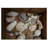 Assorted Shells, Cone Shells Terebridae, Conidae,