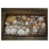 Large Assrtd Lot Of Clam Shells Oyster Abalone