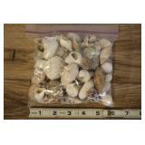 Bag Of Assorted Shells