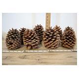 Large Pinecones