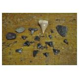 Sharks Teeth, Arrowhead And Stones