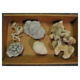 Coral, Assorted