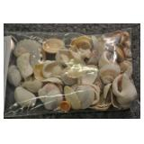Seashells, Assorted Bag