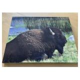 Bison In Grasslands Canvas Art Print