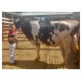 Braxton Siebert Dairy Project