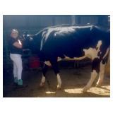 Bentlie Siebert Dairy Project