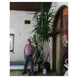 LARGE TROPICAL PLANT