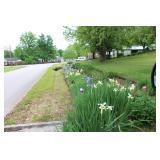 several flower beds