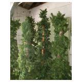 5 Tall & Narrow Pine Trees