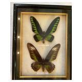 Framed Nature & Butterflies