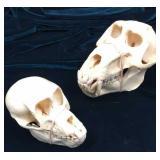 Monkey and young baboon skulls