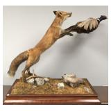 Fox jumping for ring-neck pheasant mount