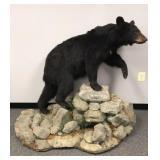 Full black bear mount on faux rocks