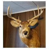 White Tail 10 Point Buck Mount | Deer Taxidermy