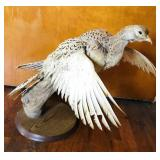 Grouse Mounted on Wood