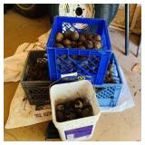2 Milk Crates and bucket of Nuts, chestnuts Or