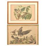 Pr. Audubon J. Bien Edition Chromolithographs