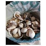 Large assortment of sea shells